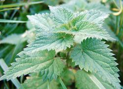 Propriétés Griffonia Simplicifolia - la déprime - Symptômes et traitement - Doctissimo